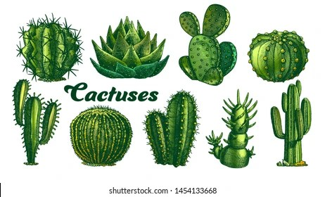 cactus images stock photos