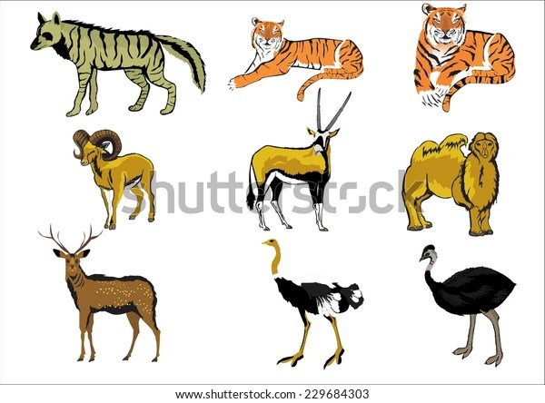 collection different type animals