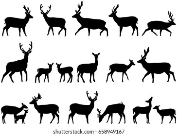 deer images stock photos