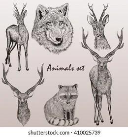 hand drawn animals images