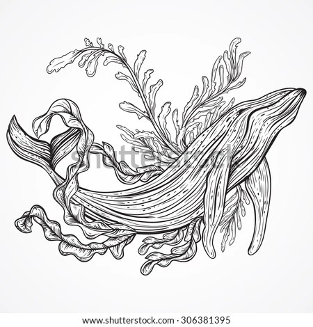 Collection Whale Marine Plants Leaves Seaweed Stock Vector