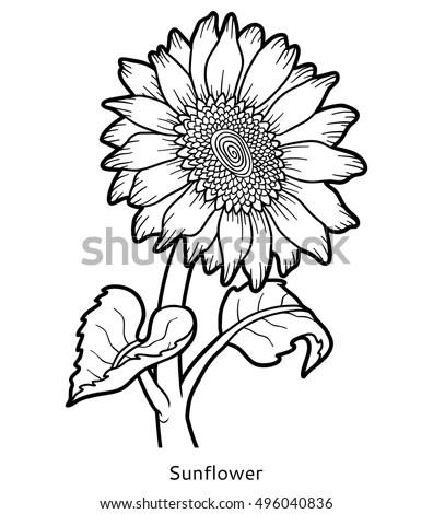 Coloring Book Children Flower Sunflower Stock Vector