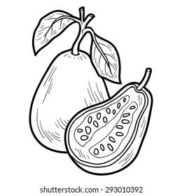 Guava Coloring Book Images, Stock Photos & Vectors