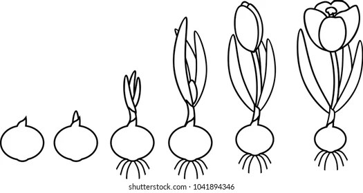 Plant Reproduction Images, Stock Photos & Vectors