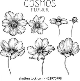 flower drawing images stock