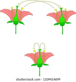 cross pollination diagram for kids 3 wire electrical wiring images stock photos vectors shutterstock and self