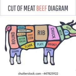 Dairy Cow Parts Diagram E36 Diagnostic Port Wiring 6 8 Kenmo Lp De Images Stock Photos Vectors Shutterstock Rh Com Steak