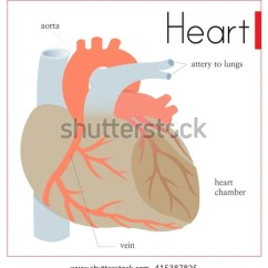 Heart Diagram Inside 1965 Chevelle Wiring Important Parts Stock Vector Royalty Free A Of The