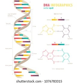 double helix images stock