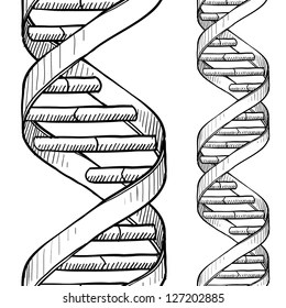 Free Download Dna The Double Helix Coloring Answers