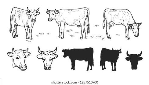 labelled diagram of a cow 2003 jetta tdi wiring illustrated images stock photos vectors shutterstock drawing cows or cattle collection isolated on the white background hand drawn sketch domestic