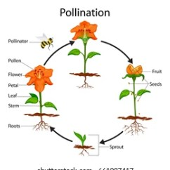 Cross Pollination Diagram For Kids Electronic Major Project With Circuit Images, Stock Photos & Vectors | Shutterstock