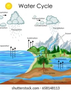 Education chart of biology for water cycle diagram vector illustration also images stock photos  vectors shutterstock rh