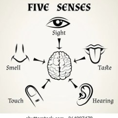 Five Senses Diagram 1999 Ford F150 Belt Images Stock Photos Vectors Shutterstock Icons Human Eye Nose And Ear Smell Taste Touch