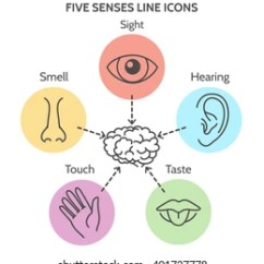 Five Senses Diagram Honeywell Wiring Thermostat Images Stock Photos Vectors Shutterstock Line Icons Human Ear And Eye Symbols Nose Mouth Outline Vector