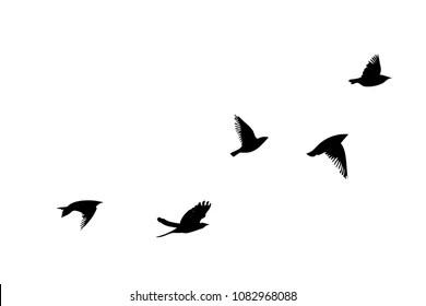Clipart Pticy Stock Vectors Images Vector Art Shutterstock