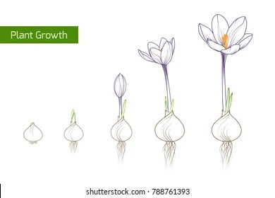 Bean Sprouts Isolated Stock Vectors, Images & Vector Art