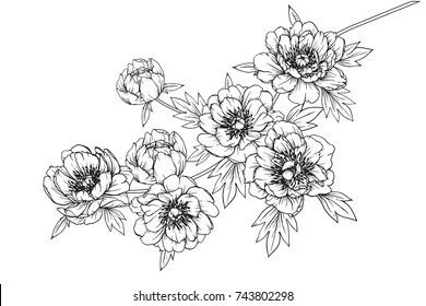 flower line drawing images