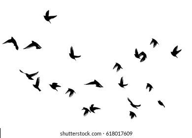 bird flying free images