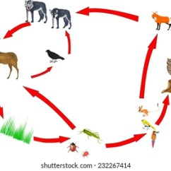 Coral Reef Food Chain Diagram Rockford Fosgate R2 Wiring Animal Images Stock Photos Vectors Shutterstock Between Different Animals In Nature