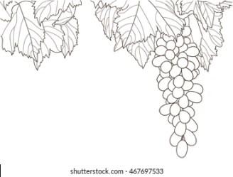 Grape Vine Outline Images Stock Photos & Vectors Shutterstock