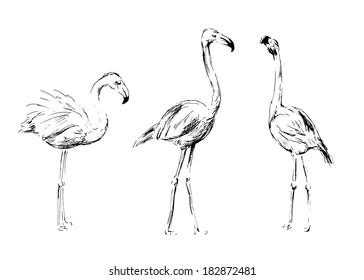 flamingo sketch images stock