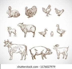 farm animals drawn stock