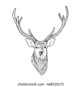 Head of a deer. Meditation, coloring of the mandala. Head