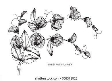Pea Plant with White Flowers Images, Stock Photos