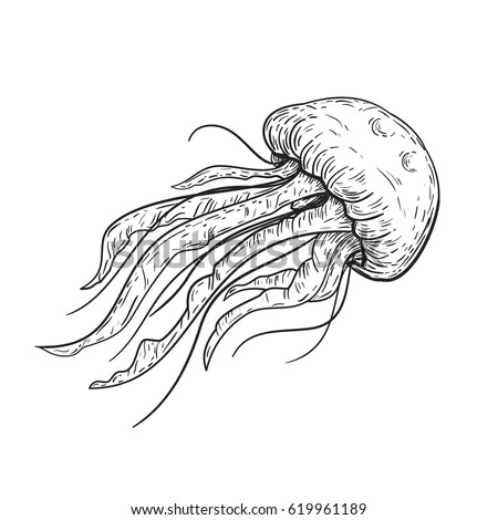 Hand Drawn Vector Sketch Jellyfish Vintage Stock Vector