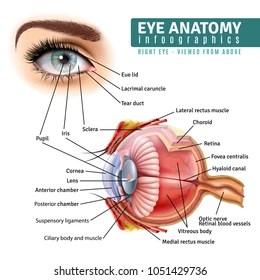 human eye anatomy images