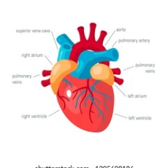 Realistic Heart Diagram Wiring Draw Human Images Stock Photos Vectors Shutterstock Concept Vector Illustration For Medical Atlas Articles Educational Textbook Etc