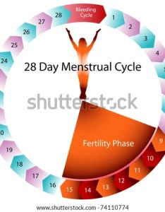 An image of  menstrual cycle chart also stock vector royalty free rh shutterstock