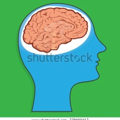 Internal Brain Diagram 6 Pin Toggle Switch Wiring Image Stock Vector Royalty Free 778999417