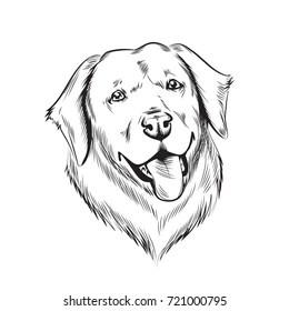 Cartoon Labrador Dog Images, Stock Photos & Vectors