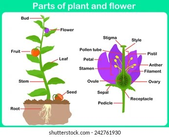 parts of a flowering plant diagram solar battery wiring part images stock photos vectors shutterstock leaning and flower for kids worksheet
