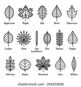 names of leaves images