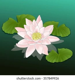 lotus in water plant diagram av cable wiring pink or lily flower a images stock photos vectors growing pond lake river colorful drawing natural background