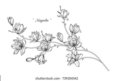 outline flower draw images