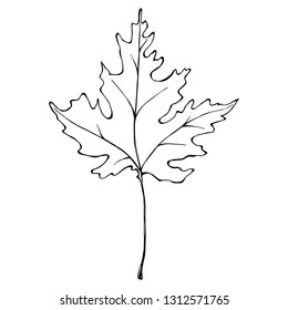 Maple Leaf Tattoo Images, Stock Photos & Vectors