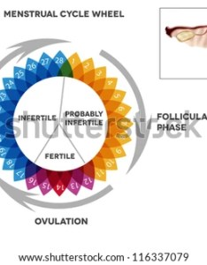 Menstrual cycle calendar detailed diagram of female period illustrated reproductive organs also stock vector rh shutterstock