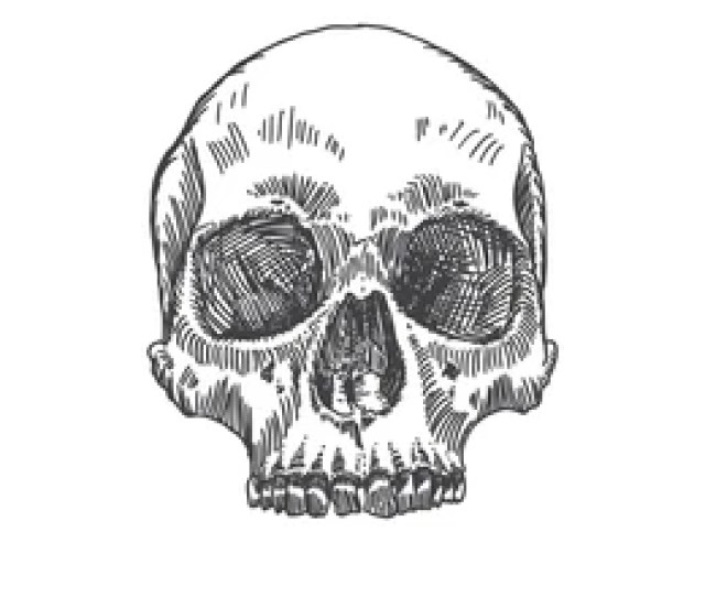 Monochrome Anatomic Drawing Of Skull Without Lower Jaw On White Background Weathered Museum