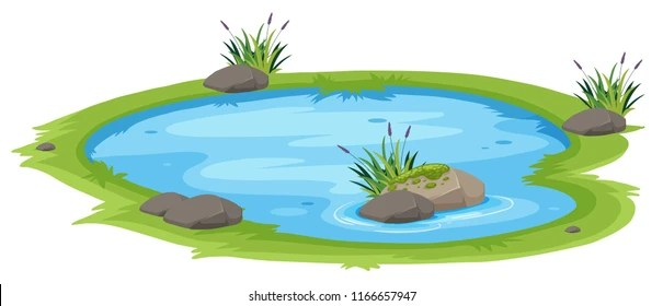 pond images stock photos
