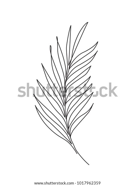 Palm Leaf Line Art Contour Drawing Stock Vector (Royalty