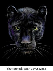 Panther Face Drawing : panther, drawing, Black, Panther, Drawing, Stock, Images, Shutterstock