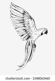 Flying Bird Sketch Images, Stock Photos & Vectors