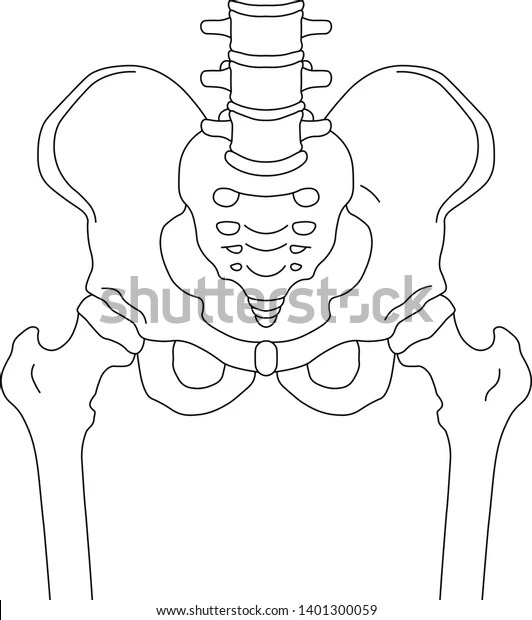 Medical Terms Anatomy
