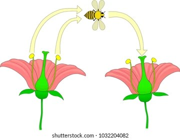 cross pollination diagram for kids 1989 toyota pickup cigarette lighter wiring images stock photos vectors shutterstock of the flower by insects
