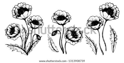 Poppy Flower Clipart Illustration Vector Flowers Stock Vector Royalty Free 1313908739