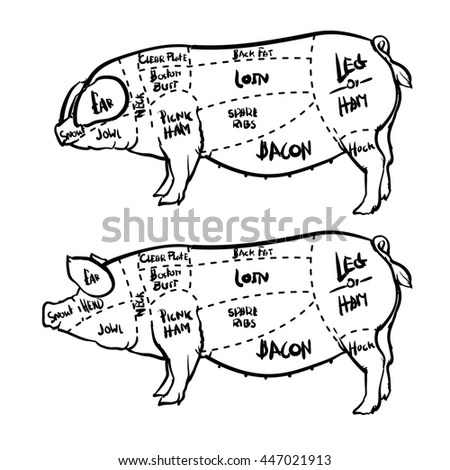 pig cuts diagram sangamo electric meter wiring pork butchery set hand stock vector royalty free and drawn isolated on white background drawing